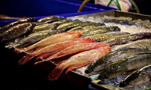 fish market phuket